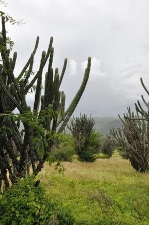 Cactus near San Vicente