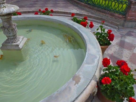 Fish pond in San Miguel de Allende Mexico