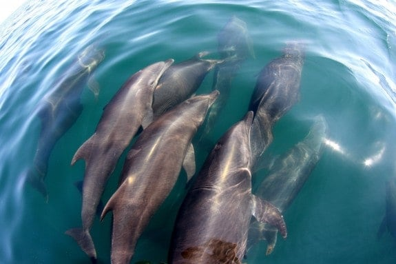 Dolphins seen on a tour with Deep Blue Dive in Puerto Escondido, Oaxaca.