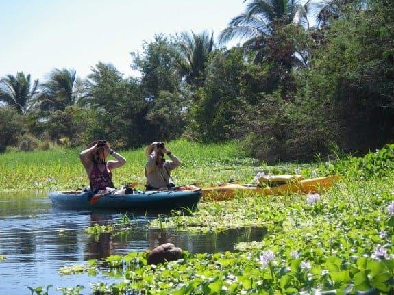 Two birdwatchers kayaking in Manialtepec Lagoon. (Credit: Hidden Voyages Eco-tours)