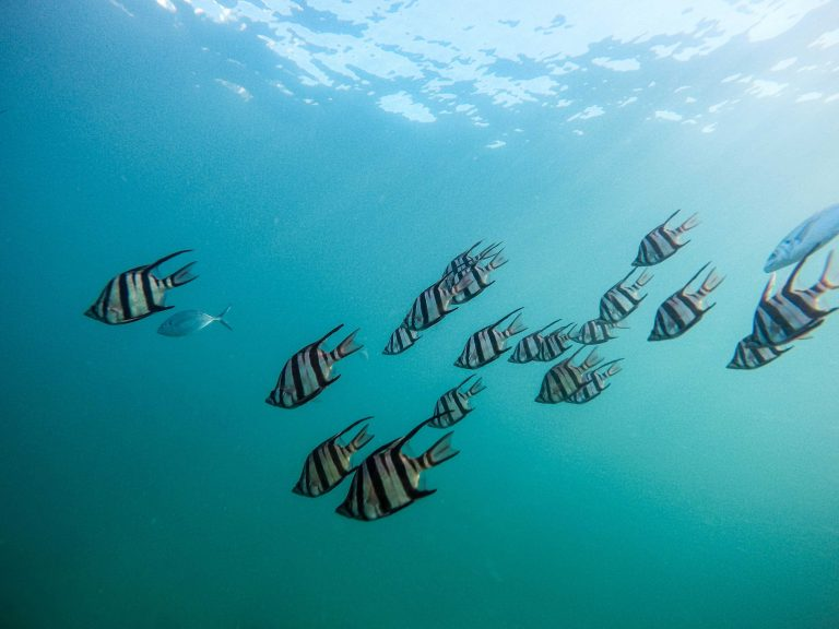 snorkeling Huatulco Mexico