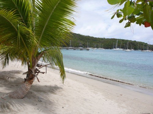 Beach with palm tree in Martinique.