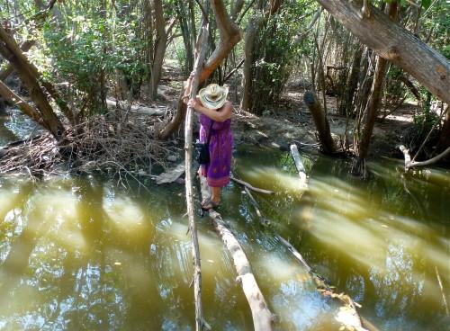 Mangrove lagoon at Barra de Navidad
