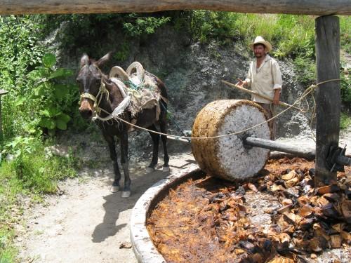 Mezcal Process on Beer Lovers' Tour of Oaxaca Photo Credit: Alvin Starkman