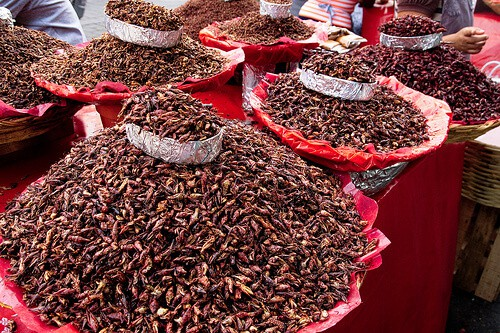 Toasted chapulines ( grasshoppers) in market in Oaxaca