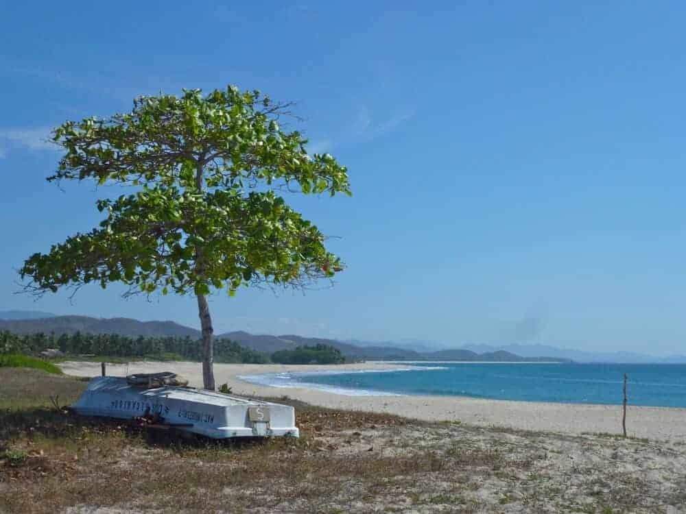 Almond tree at Roca Blanca beach near Puerto Escondido Mexico.