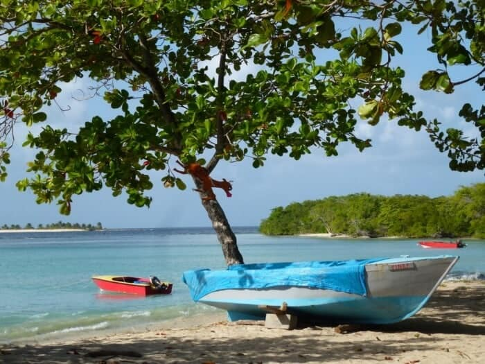 Tree on Paradise Beach on the island of Carriacou.