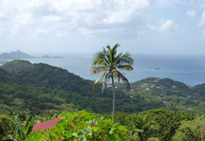 Lush vegetation overlooking ocean in Carriacou.