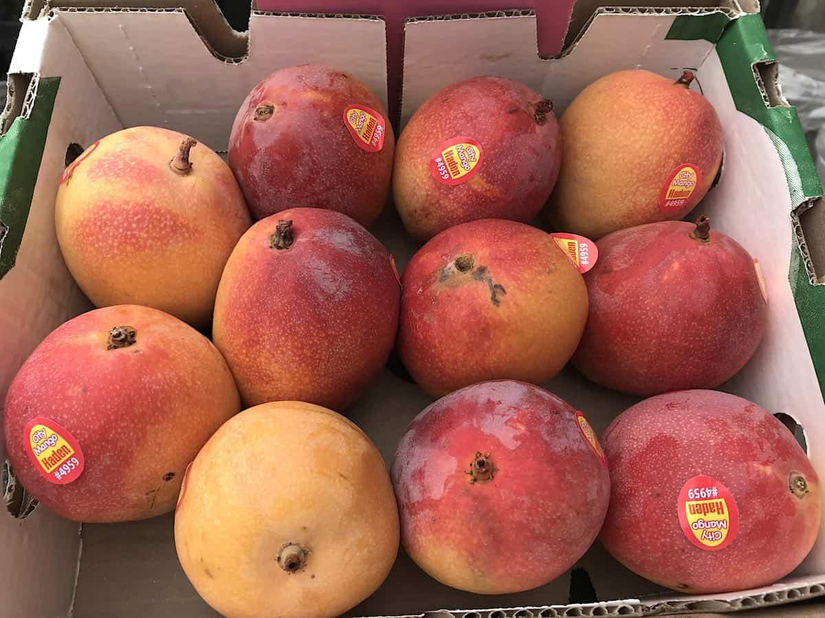 Haden mangoes in a cardboard box.