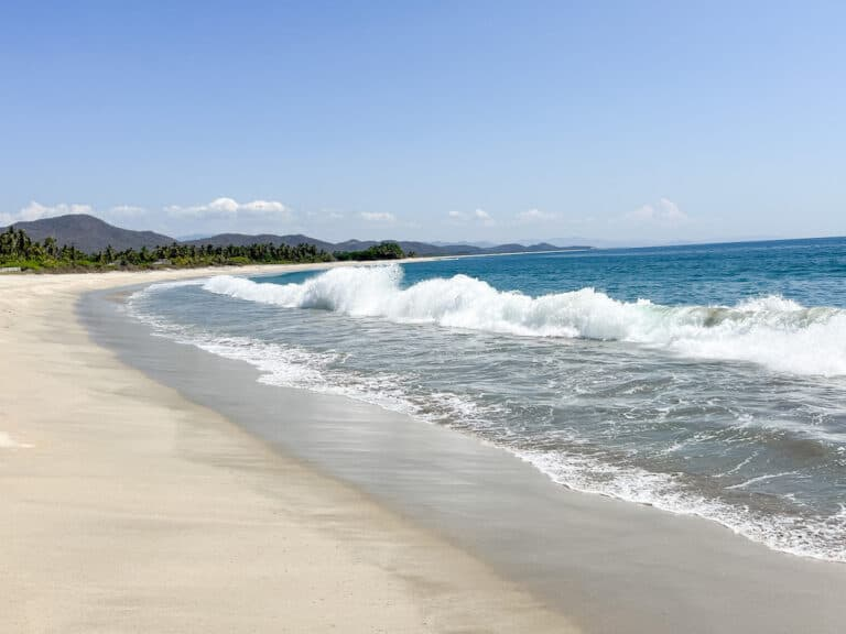 Almond tree at Roca Blanca beach, Oaxaca