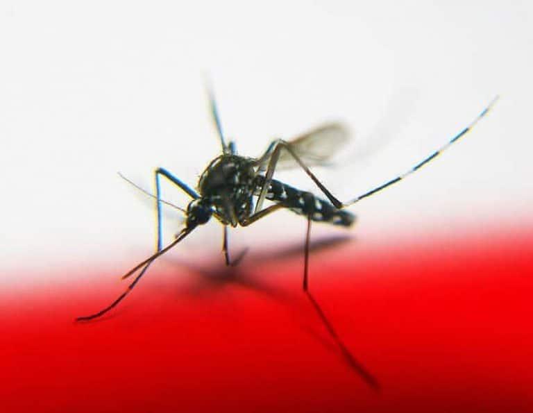 Mosquito Credit- tanakawho