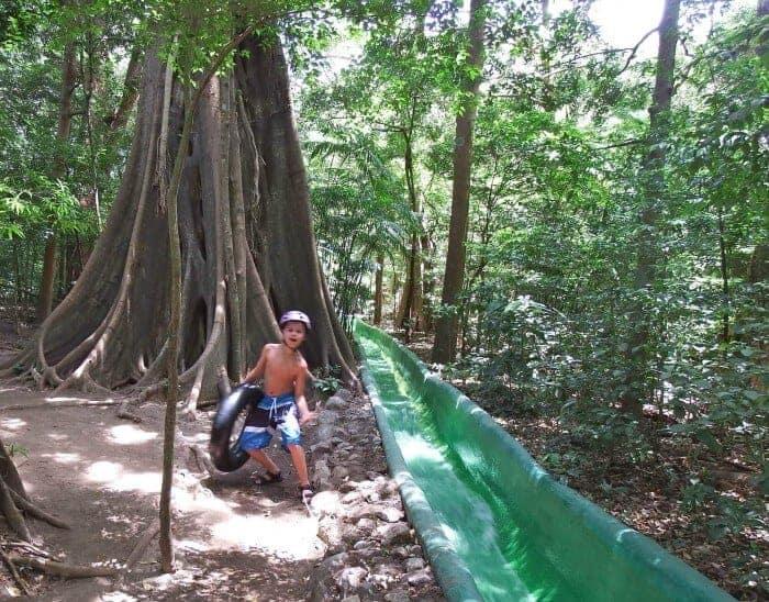 A towering matopalo tree and water slide in the rainforest Rincon de la Vieja in Costa Rica