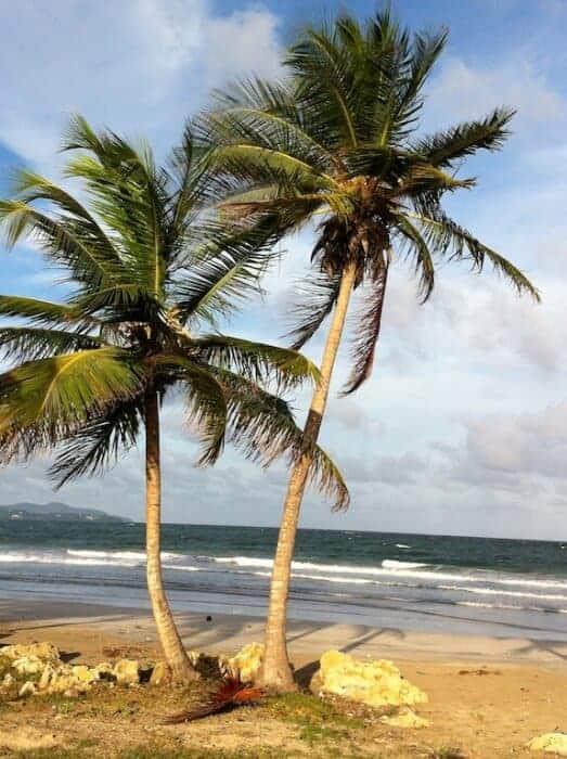Windswept coastline of Tobago