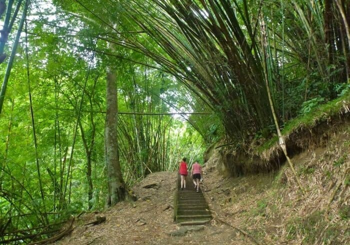 Hike a bamboo forest to Argyle Falls