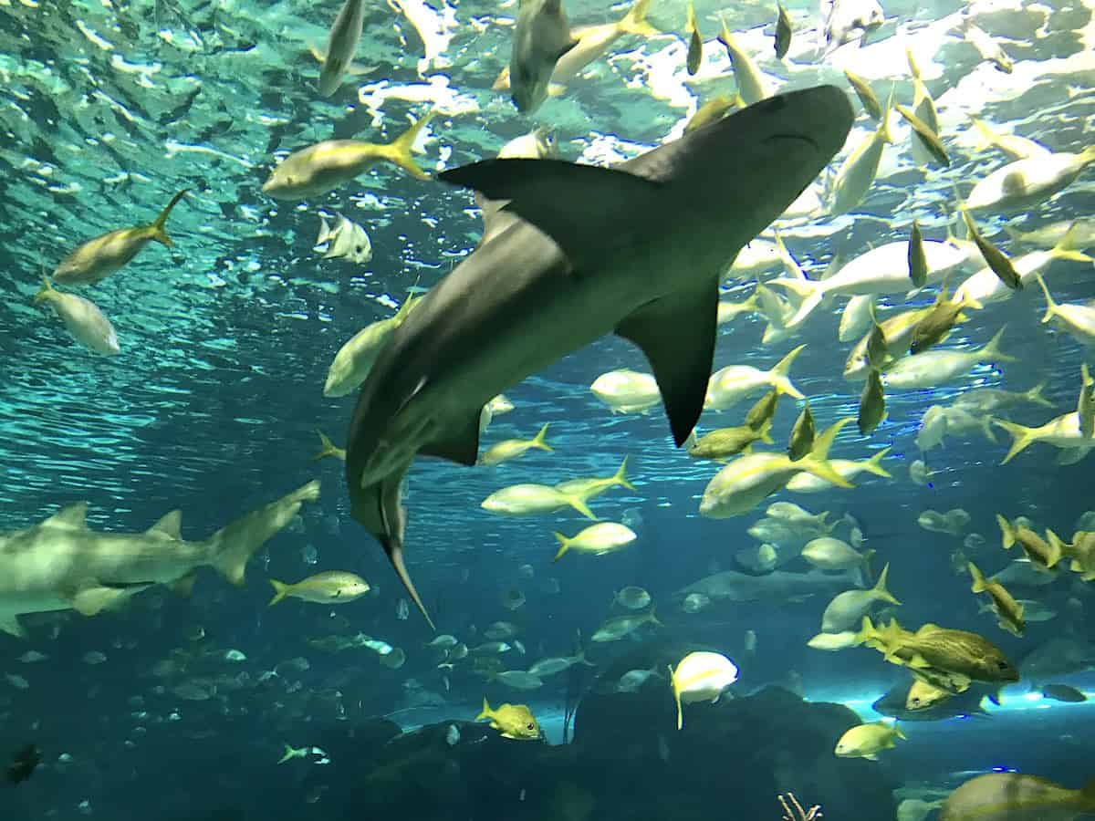 View of shark in Ripley's Aquarium on a Toronto itinerary.
