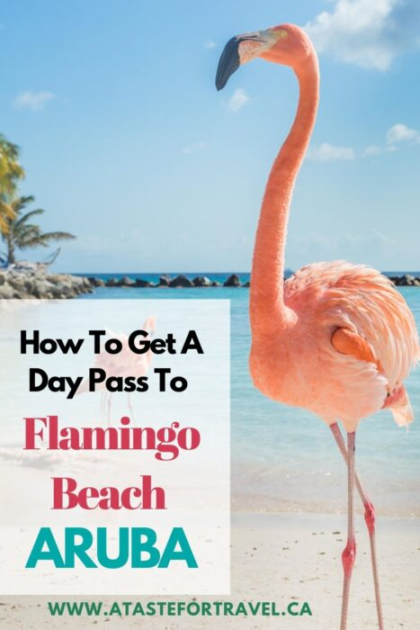 Flamingos on a beach with text overlay about Day Pass to Renaissance Island