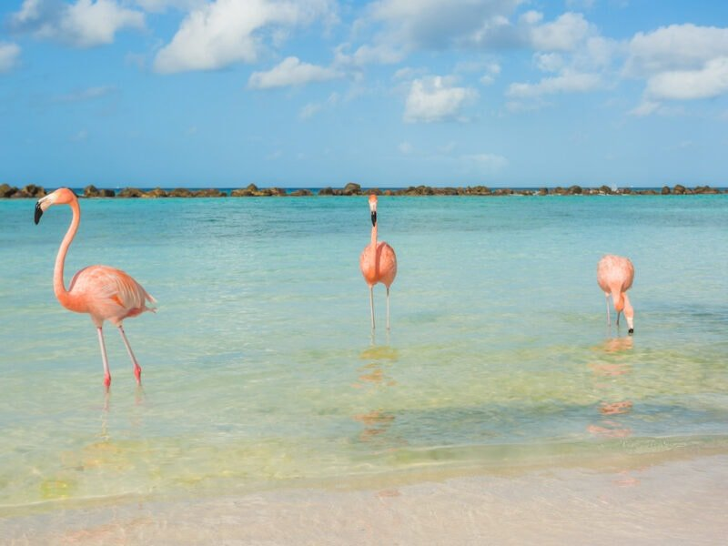 Three flamingos on a beach on Renaissance Island Aruba