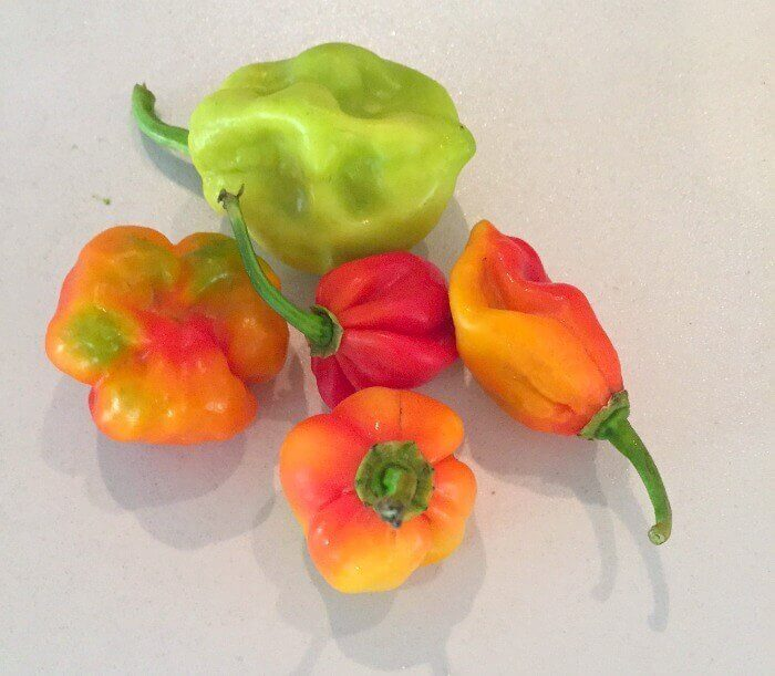 Madame Jeanette peppers are a type of hot pepper from Suriname that are popular in Aruba
