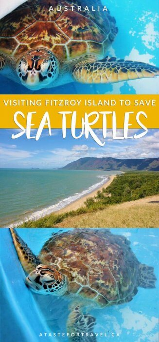 saving-sea-turtles-fitzroy-island-pin