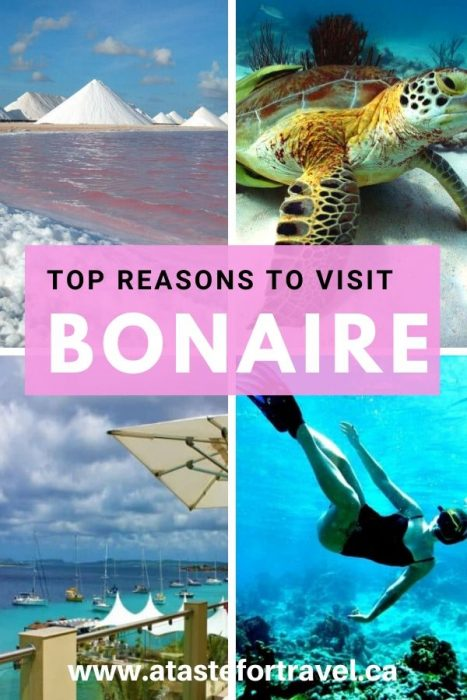 Things to Do in Bonaire Dutch Caribbean