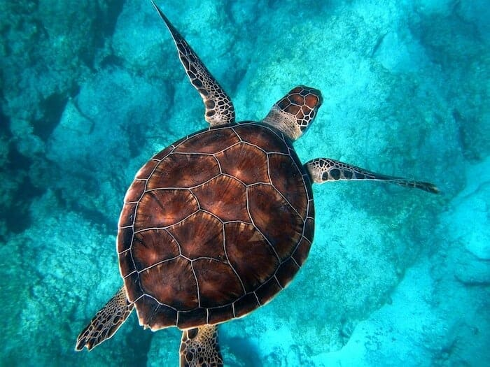 Sea Turtle Photo by Randall Ruiz on Unsplash