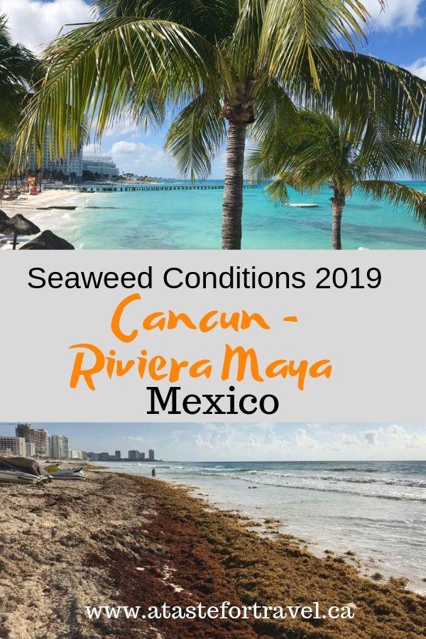 Seaweed in Cancun 2019