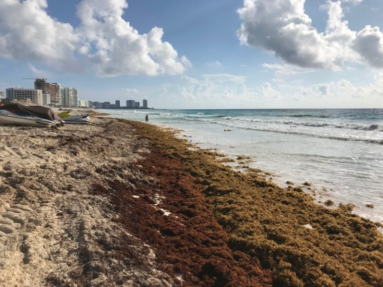 Sargassum seaweed in Cancun 2018