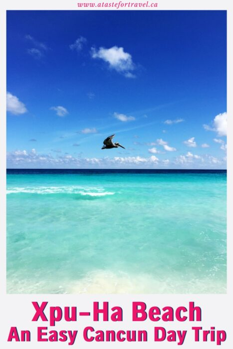 Pelican flying over turquoise water with text overlay of XPU-HA Beach