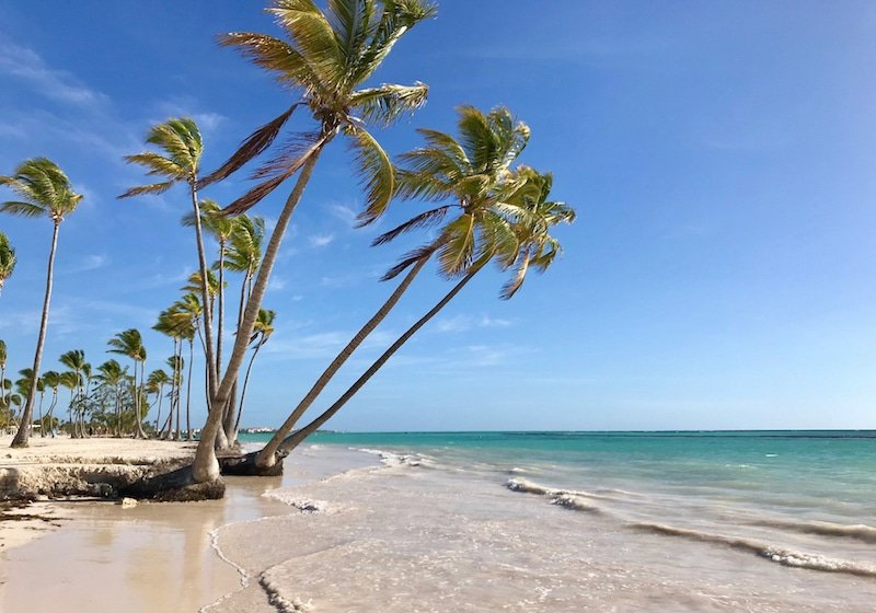 palm trees of Juanillo Beach at Cap Cana Punta Cana