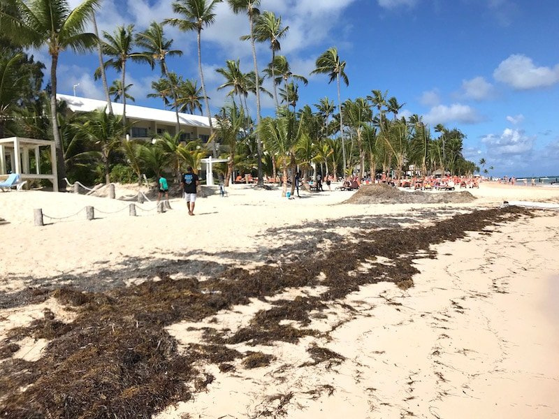 Best Beaches in Punta Cana: Seaweed Conditions & Swimming