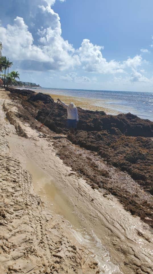 Sargazo seaweed in Cancun Riviera Maya on July 19, 2021.