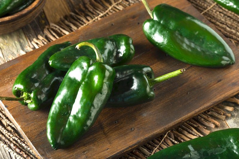 fresh poblano chile peppers
