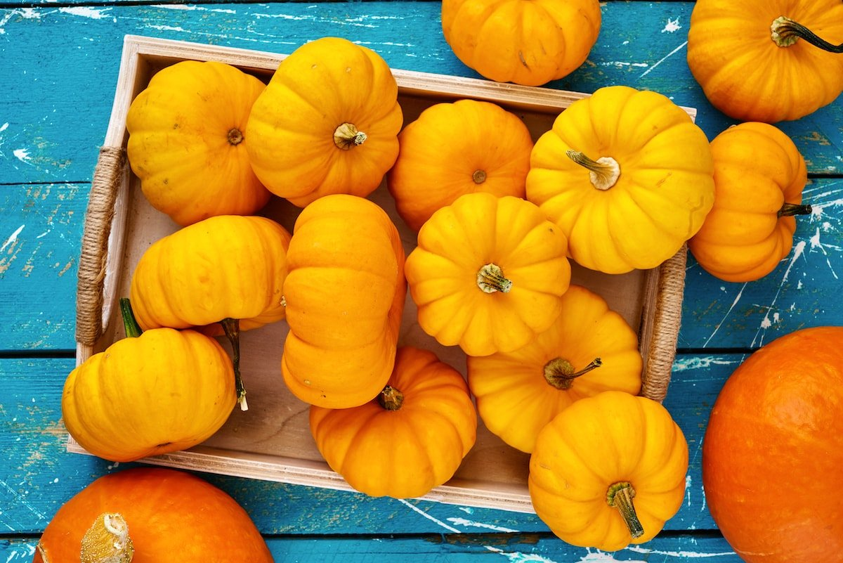 fall pumpkins on a blue background