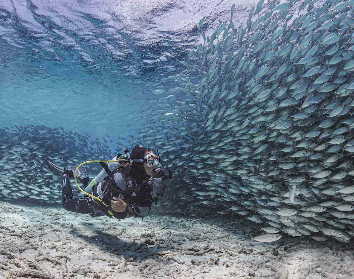 Diver encountering fish underwater in Bonaire.