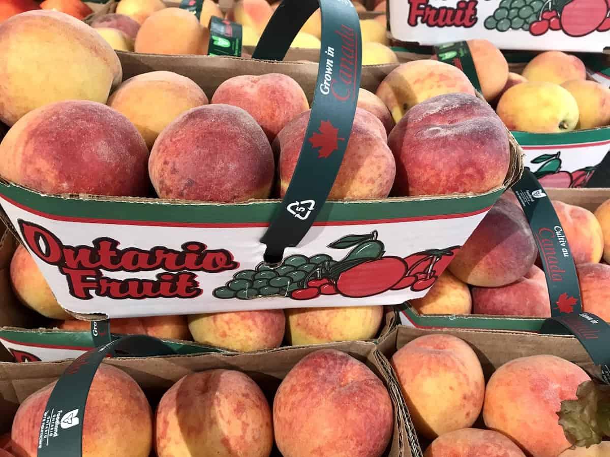 Baskets of fresh Ontario peaches.