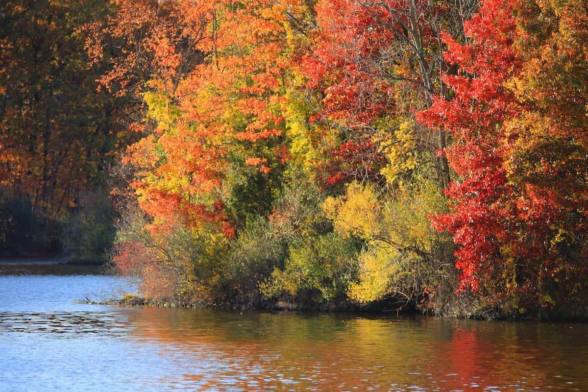 View of fall foliage on a lake.