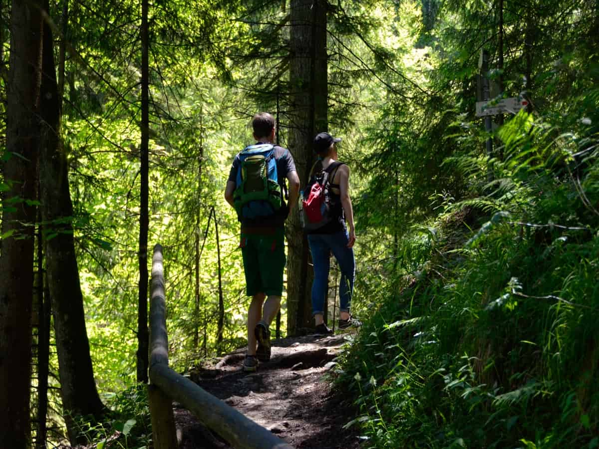 Two people walking on a forest trail surrounded by green foliage.