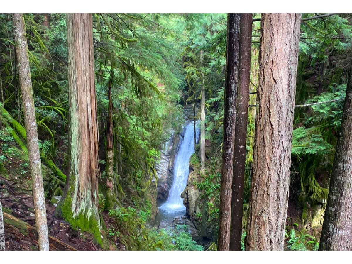 A view of Cypress falls through trees with a waterfall in the background.