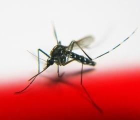 12 ways to protect yourself from zika, chikungunya or dengue virus